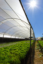 Hydroponics Outdoors Royalty Free Stock Photography - 60157617