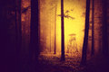 Grunge Yellow Red Color Scary Forest Hunting Tower Stock Photography - 60161602