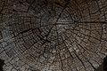 Tree Rings Old Weathered Wood Texture With The Cross Section Of Stock Photos - 60208493