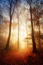 Fascinating Light In A Foggy Forest Stock Image - 60213491