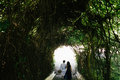 Couple Walking Through The Tunnel Of Trees Royalty Free Stock Photos - 60218978