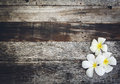 Wood Background  With Plumeria Stock Photos - 60230603