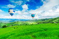 Balloon Flying On Rice Field, Rice Field In Mountain Or Rice Terrace In The Nature, Relax Day In Beautiful Location Stock Photo - 60231450