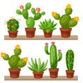 Collection Of Abstract Cactuses In Flower Pot On Stock Image - 60248381