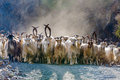 Herd Of Mountain Goats Royalty Free Stock Photography - 60253427