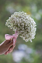 Lady S Hand Holding Baby S Breath Flowers Stock Photography - 60277322