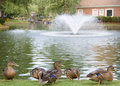 Ducks By Lake With Fountain Stock Photos - 6038773
