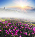 Rhododendrons In May Royalty Free Stock Photo - 60308375