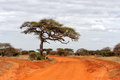 Landscape With Tree In Africa Stock Images - 60327494