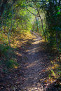 Path In Forest Stock Photography - 6044002