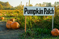 Pumpkin Patch Royalty Free Stock Photo - 6045715