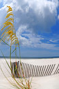 Sea Oats Under Dramatic Sky Royalty Free Stock Images - 6046499