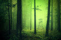 Grunge Green Colored Scary Dark Woods Hunting Tower Royalty Free Stock Image - 60405906
