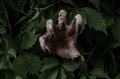 Horror And Halloween Theme: Terrible Dirty Hand With Black Fingernails Zombie Crawls Out Of Green Leaves, Walking Dead Apocalypse Royalty Free Stock Images - 60432889