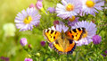 Butterfly On Flowers Stock Images - 60501554