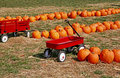 Pumpkins For Sale Royalty Free Stock Photo - 6065785