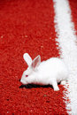 White Rabbit On A Racetrack  Stock Images - 6069814