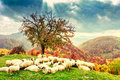 Sheep Under The Tree And Dramatic Sky Royalty Free Stock Images - 60622539