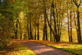 View  Colorful Park Alley In Autumn. Royalty Free Stock Image - 60624976