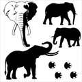 Elephant Silhouetted Vector Royalty Free Stock Image - 60637166