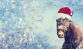 Black Christmas Horse With Santa Hat Smiling And Looking Into Camera On Winter Snowflakes Background , Banner, Royalty Free Stock Photography - 60665957