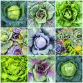 Leaf Vegetables, Cabbage And Lettuce Collage Royalty Free Stock Photo - 60674855
