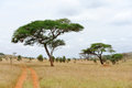 Landscape With Tree In Africa Royalty Free Stock Photography - 60681507