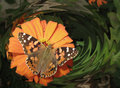 Butterfly In Orange Stock Images - 6075014