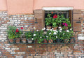 Open Window With A Row Of Flower Pots Stock Photography - 60701312