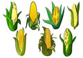 Isolated Weet Corn Cobs Vegetables Royalty Free Stock Photos - 60780878
