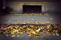 Autumn Leaves On Street Stock Images - 60784494