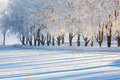 Frosted Trees Stock Photos - 60811483