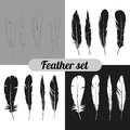 The Collection Of Feathers Royalty Free Stock Image - 60820636