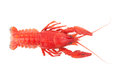 Crayfish Royalty Free Stock Photography - 60874407