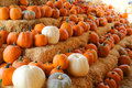 Fall Pumpkins Royalty Free Stock Image - 60877526