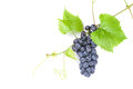 Bunch Of Red Grapes Stock Photos - 60927533