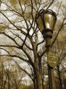 Lampost, Sign, Trees Royalty Free Stock Image - 617696