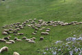 Pasture With Sheep In  Mountains Stock Image - 61027321