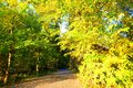 Autumn Forest Path Royalty Free Stock Images - 61030989