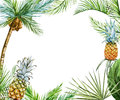 Tropical Frame Raster Royalty Free Stock Images - 61131039