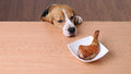 Dog In Front Dish On Table And Looking Piece Chicken Royalty Free Stock Image - 61138186