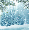 Winter Christmas Background With Fir Tree Branch Royalty Free Stock Image - 61227106