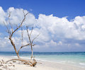 Dried Tree Trunk With Bare Branches On The Backdrop Of Blue Sea Royalty Free Stock Photography - 61229797