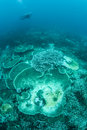 Bleaching Corals On Pacific Reef Stock Photos - 61241423