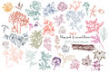 Mega Collection Of High Detailed Vector Flowers For Design Royalty Free Stock Images - 61249809