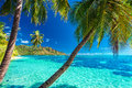 Palm Trees On A Tropical Beach With A Blue Sea On Moorea, Tahiti Royalty Free Stock Image - 61264666