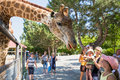 Giraffe In Zoo Stock Images - 61275434