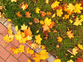 Fallen Maple Leaves Royalty Free Stock Photos - 61311698