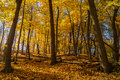Autumn In The Woods. Royalty Free Stock Photography - 61325337