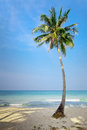 Lonely Palm Tree Royalty Free Stock Image - 61372476